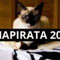 anapirata2018